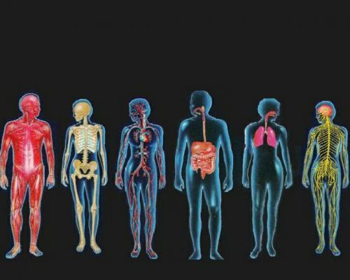 13 любопитни факта за човешкото тяло